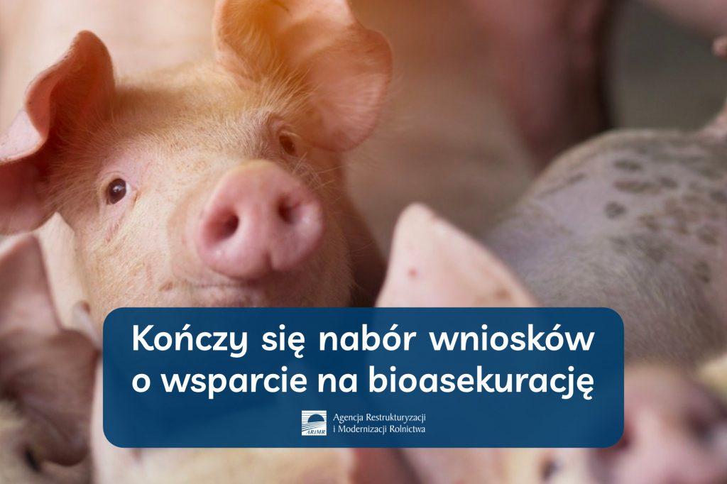 Kończy się nabór wniosków o wsparcie na bioasekurację - informacja prasowa